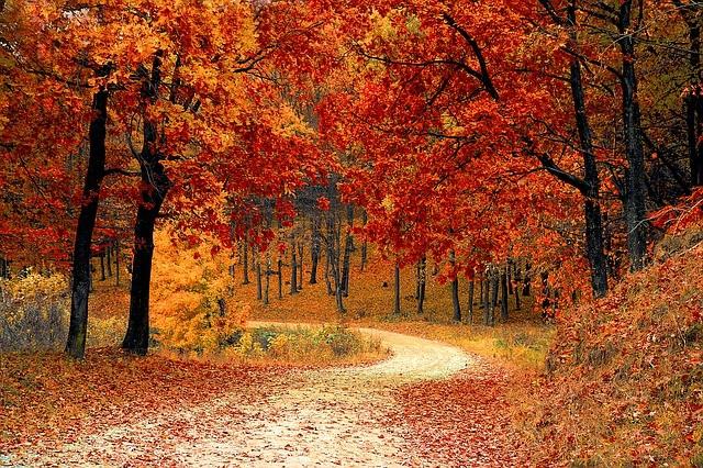Suplementos naturales para el otoño
